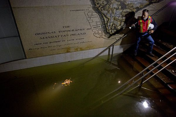 Метро нью-йорка стало могилою для мільйона потонули там щурів