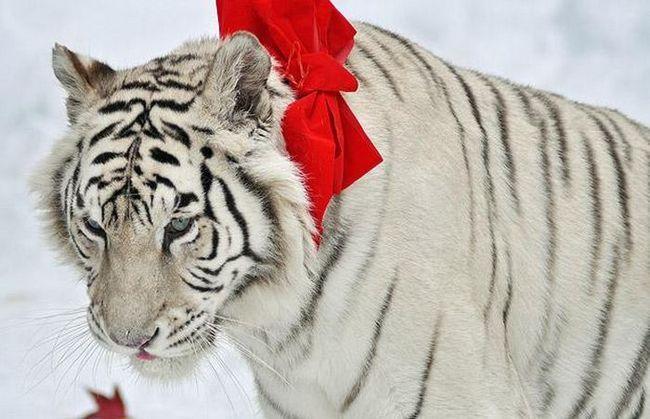 Різдво приходить в зоопарки