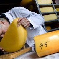 Мікробіологічний аналіз сиру