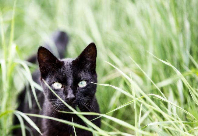 Мільбемакс для кішок: інструкція із застосування