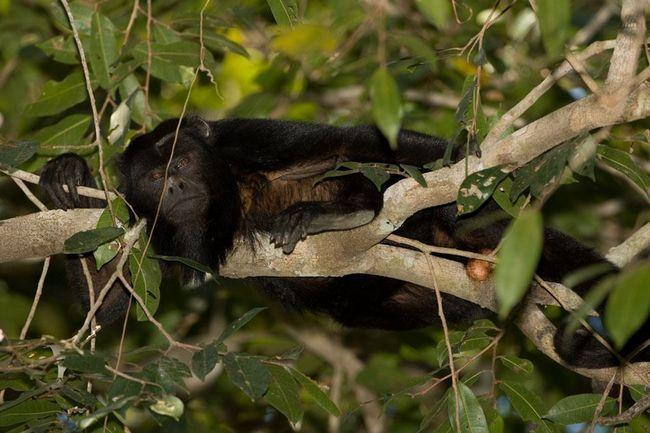 Світ фауни Пантанала