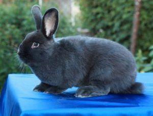 Кроленята ростуть швидко
