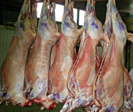 М`ясні породи овець