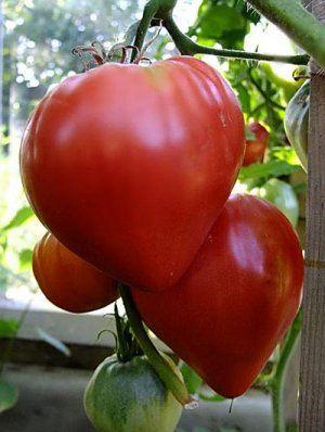 Плоди великі і смачні