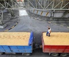 Молдова не буде експортувати зерно