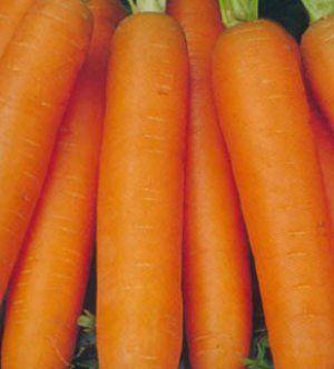 Полив дуже важливий для моркви