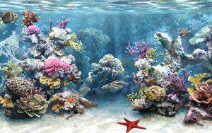 Морська акваріумістика