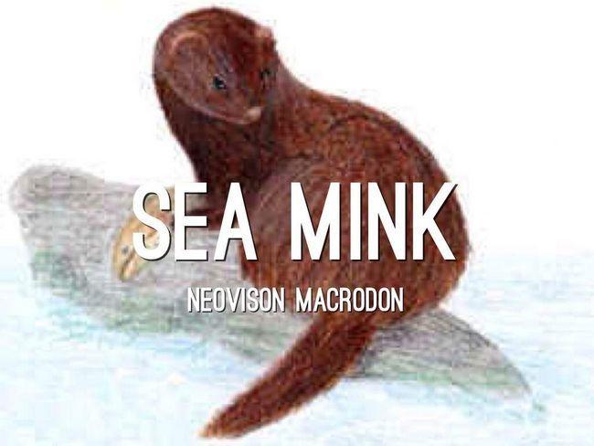 Морські видри вели нічний спосіб життя і були хижаками.