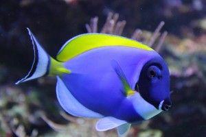 Морські акваріумні рибки