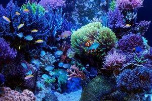 Морський акваріум, з чого почати?
