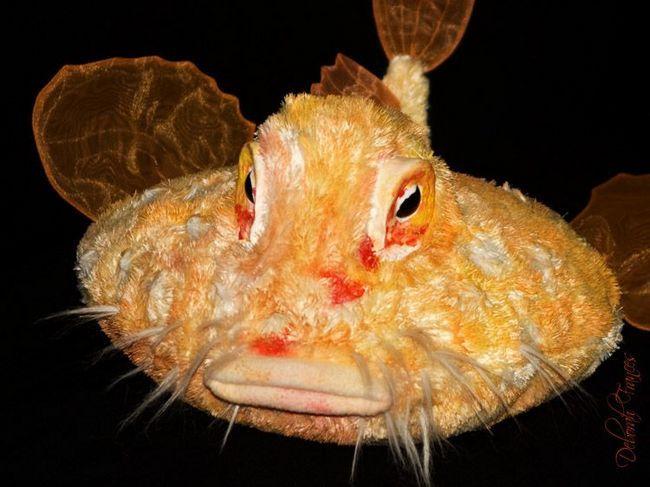 Луїзіанська риба-млинець (Halieutichthys intermedius).