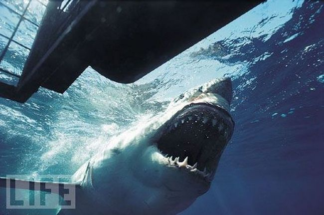 Для людини акули - це уособлення могутності, величини, сили, погрози, дикості і люті.