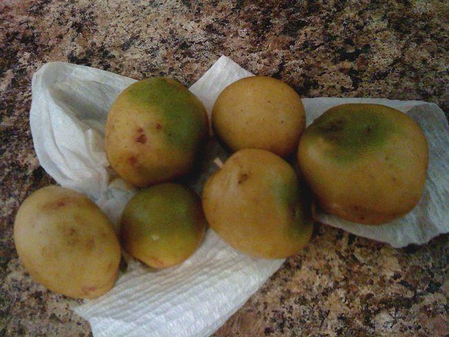 Чи можна давати зелену картоплю худобі?