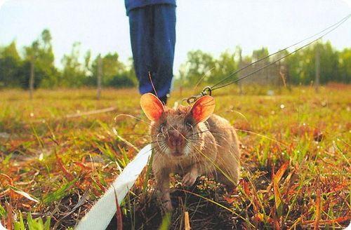 Миші йдуть на роботу в службу безпеки