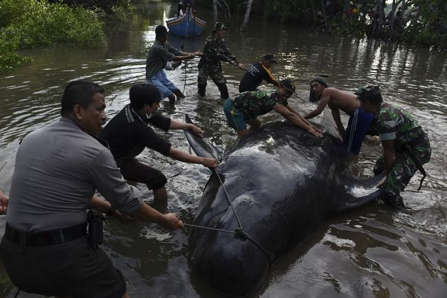 Активну участь у порятунку китів взяли місцеві жителі.
