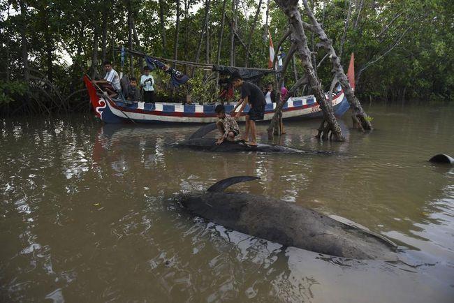 Діти не упустили можливості покататися на китах.