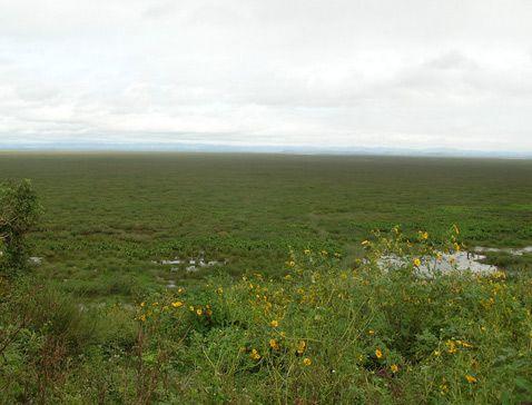 Болотисті околиці озера Алаотра.