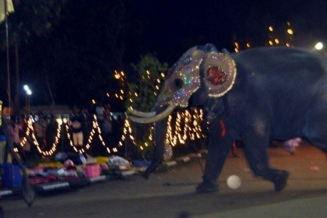 На острові Шрі-Ланка слон напав на людей.