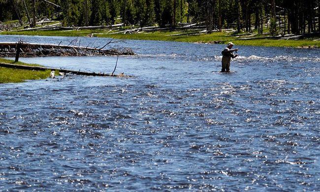 У річках заповідника водиться Єллоустонський лосось, якого можна ловити за спеціальною ліцензією