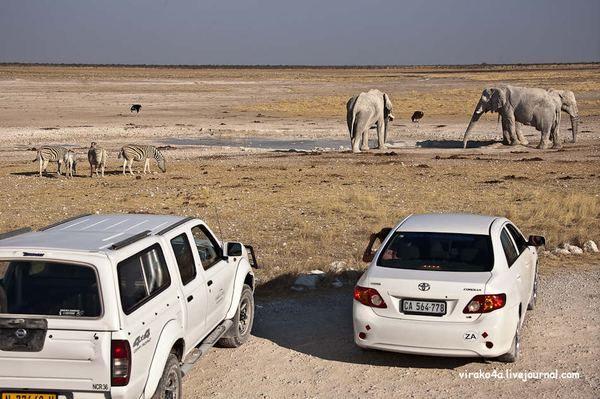 Національний парк Етоша (англ. Etosha) в Намібії