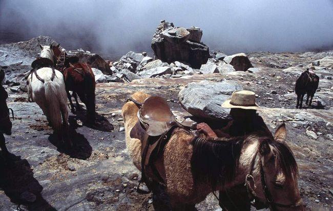 Від місця, де стоять ці коні біля краю льодовика Рітакуба і до вершини ще 4,26 кілометрів.