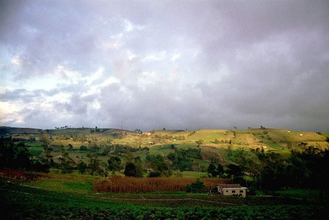 На північ від Боготи, по дорозі до Cocuy, знаходиться регіон Boyac з багатими сільськогосподарськими угіддями.