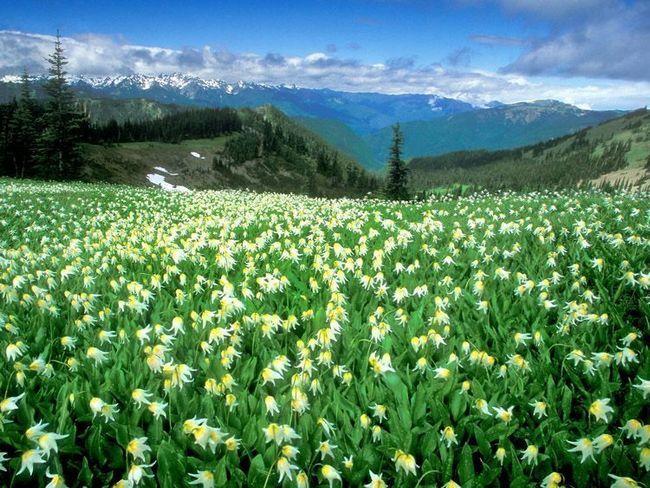 Безкраї луки і чудові гірські пейзажі.
