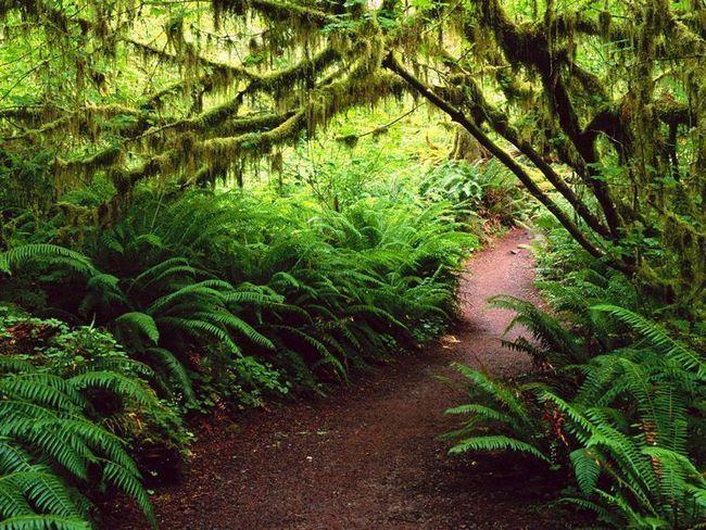 Пересуватися по лісах Національного парку Олімпік легко, завдяки упорядкованим стежках.