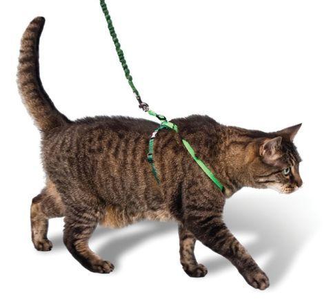 Надягаємо на кішку шлею - правила і поради