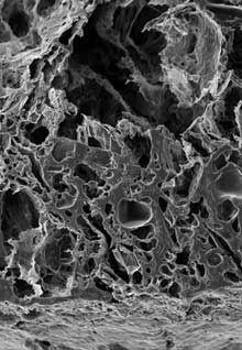 Вакцина-імплантат вилікувала мишей від раку