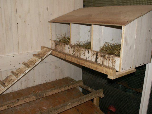гнізда, клітки для курей