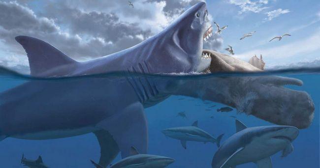 Доісторична акула мегалодон мала унікальні зуби.