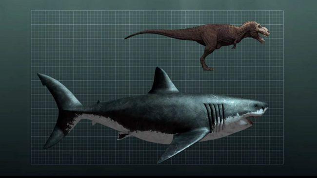 Розміри мегалодону в порівнянні з динозавром.