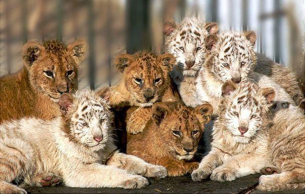 Неймовірні пари в світі тварин