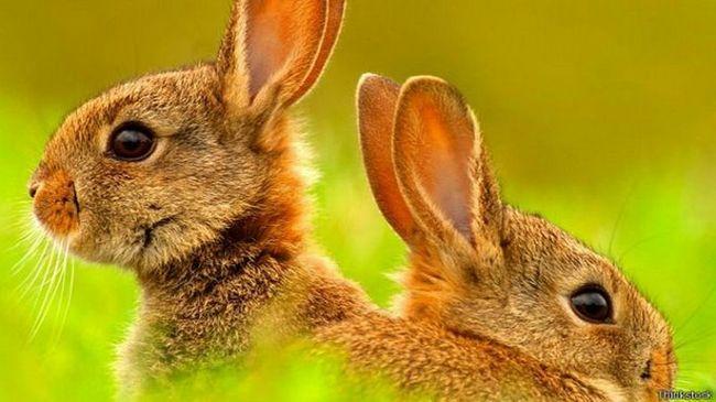 Вся правдо про кроликів