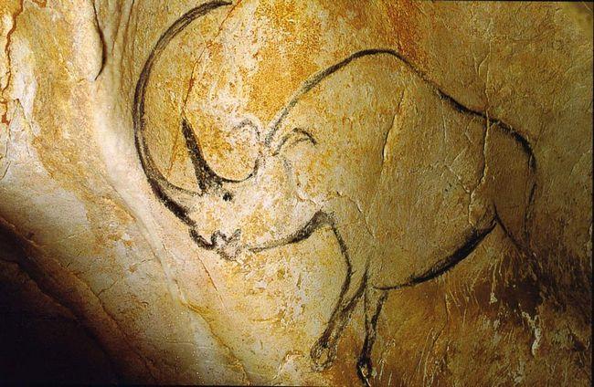Носороги оселилися на Землі вже дуже давно, про це свідчать навіть наскельні малюнки, знайдений в одній з печер (у Франції).