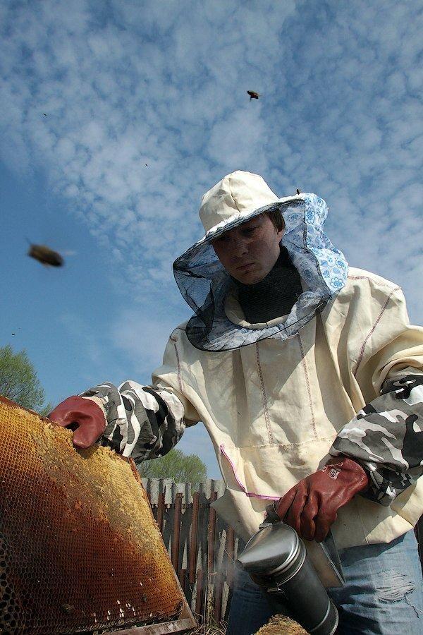 Про пасіці, бджолах і меді (частина 1)