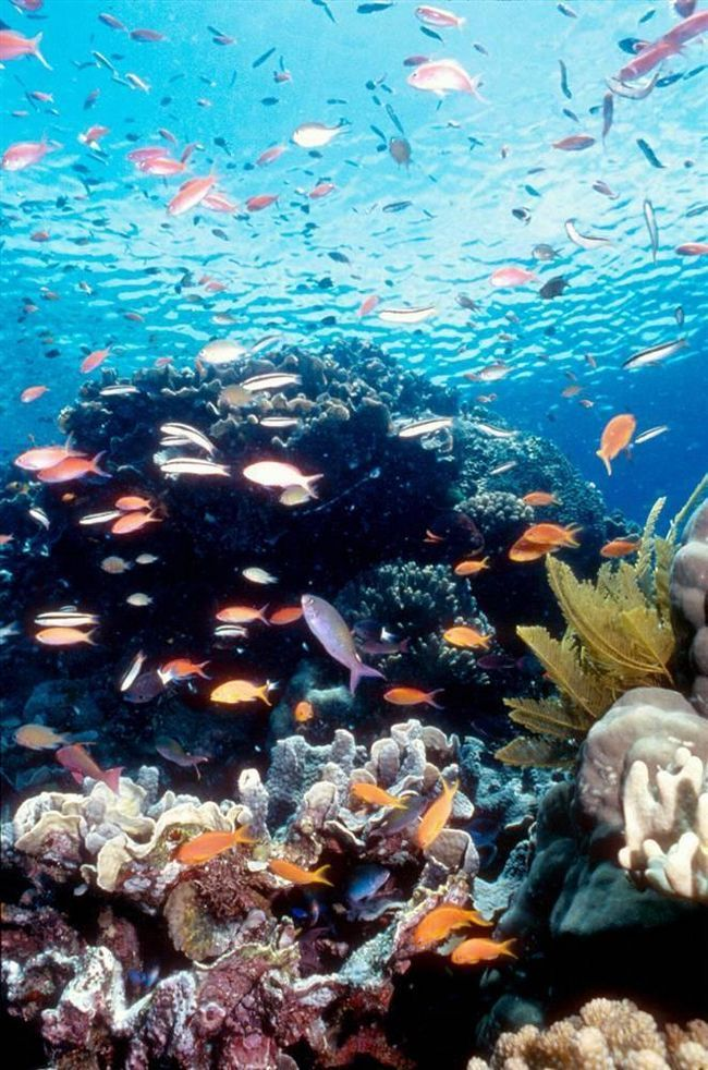 Об`єкти Всесвітньої спадщини, включені до спеціального списку ЮНЕСКО
