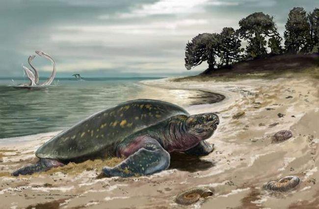 Знайдена найстаріша морська черепаха.