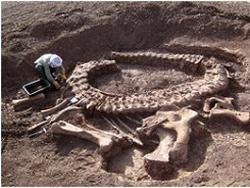 Виявлено останки раніше не досліджувався виду динозавра