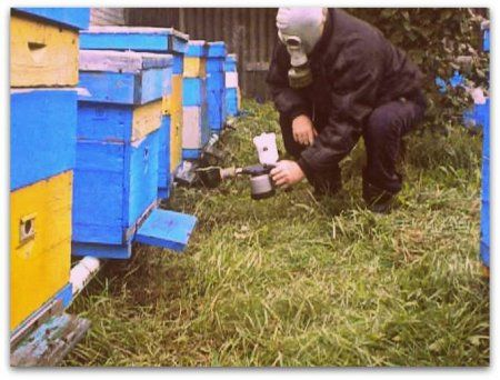 Обробка бджіл бипином восени