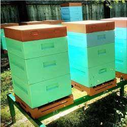 Загальна характеристика, особливості конструкції і змісту бджіл у вулику нижегородец