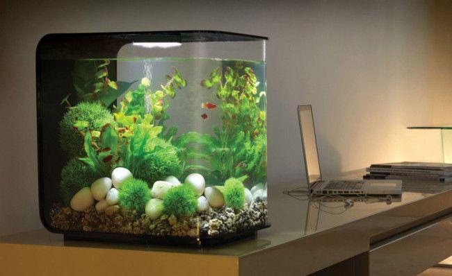 Невеликий акваріум.