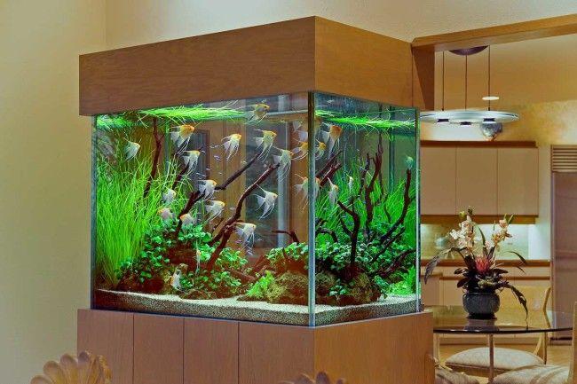Місце для акваріума.