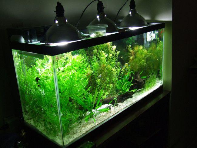 Освітлення акваріума.