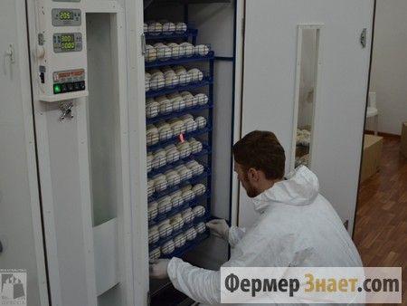 Завантаження яєць