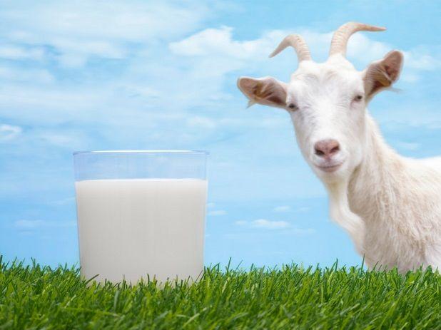 молоко козяче