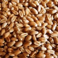 Огляд позабіржового ринку пшениці україни на 22.06.2014