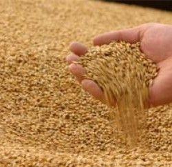 Очищення зерна