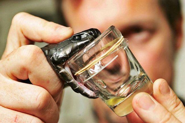 Вчені за крок від створення універсального протиотрути від укусів змій